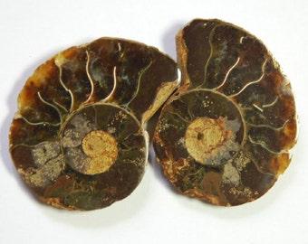 82 carat mirror pair of fossil ammonite cabochons