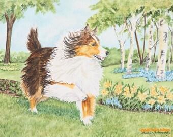"""8x10 Giclee Print, sable Sheltie, """"Fun's My Middle Name!"""", Hand Drawn Art, sable Shetland Sheepdog among daffodils"""
