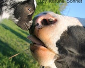 A Kiss Hello; Rescued cow and goat greet one another for the first time