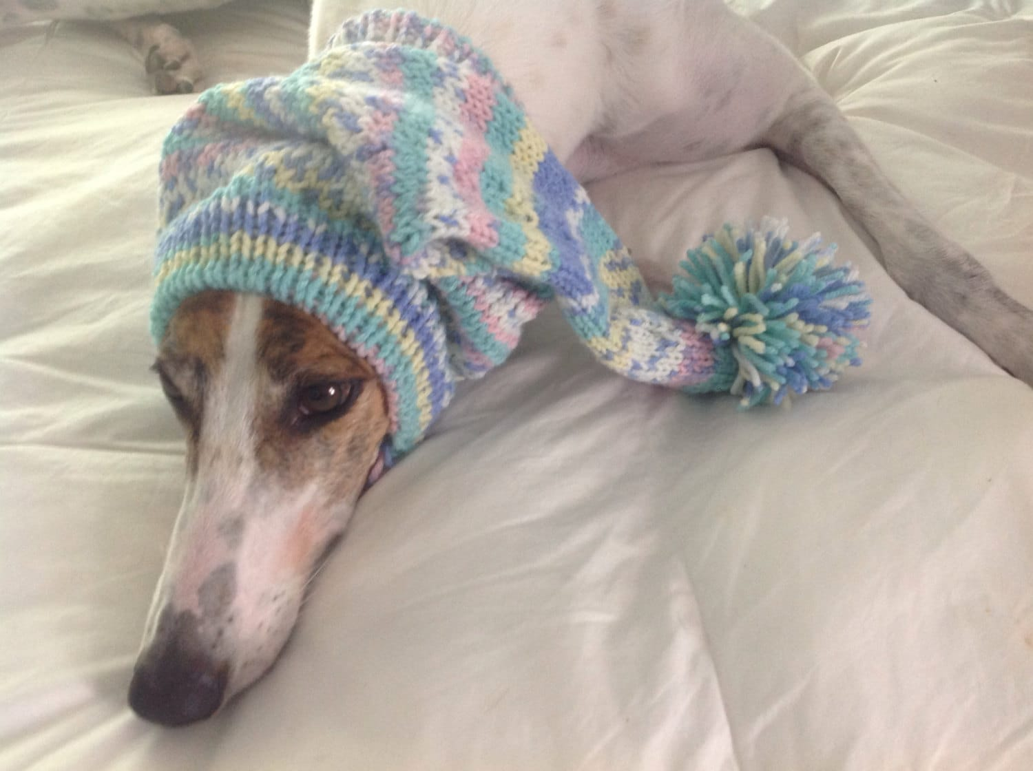 Pointed hat with snood for greyhound fair isle pattern baby shades bankloansurffo Images