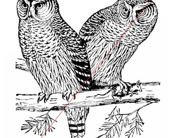Owls - Temporary tattoo
