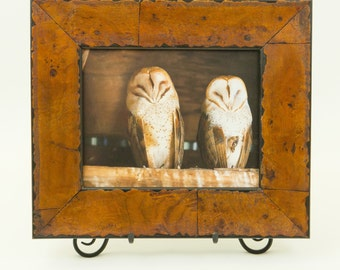 Picture of Barn Owls