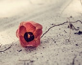 Digital Photography Download - Beautiful red flower on white sand