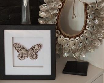 Beautiful Idea leuconoe Butterfly Framed - Taxidermy - Handcraft Art  - Home Decoration