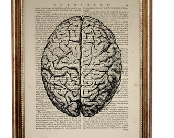 Anatomy Art, Anatomy Gift, Anatomy Print, Anatomy Poster, Human Brain Artwork, Medical Student Gift Dictionary Art