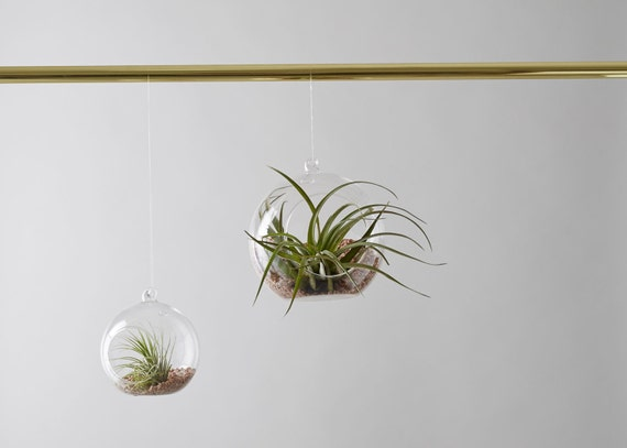 Glass air plant hanger for Air plant wall hanger