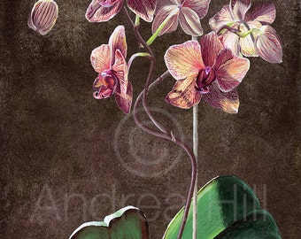 "Kaleidoscope Phalenopsis Orchid Giclee Print of Acrylic Painting (with White Border) - 5"" x 7 """
