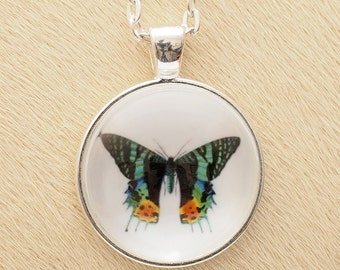 Butterfly 33 - Scientific Illustration - Pendant Necklace - Science Jewelry
