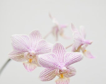 Pink Orchid Photo, Flower Photography, Large Wall Art, Shabby Chic Wall Decor, Floral Art, Flower Print - Barely There