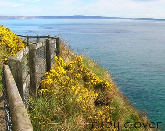 Gorse at Kinbane, Irish Sea, Yellow Flowers, Gorse Photo, Co. Antrim, Northern Ireland, Coastal Decor, Ireland Photography, Nautical Decor