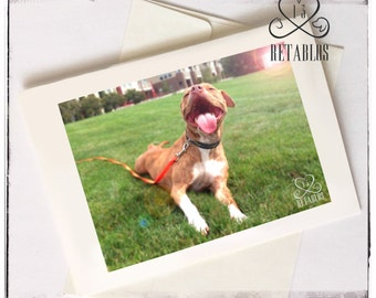Proceeds to Animal Rescue, Bully Breed Greeting Card, Nature Photo, Happy Dog Outdoors, Foster Dog, Any Occasion, Blank
