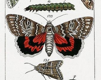 Digital Download Moth  Yellow Teal Red Green Instant Download You Print Digital Image 300 DPI