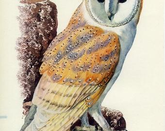 Barn Owl, Large Vintage Print, 1947,Tunnicliffe 65, Woodland Decor, Country Cottage Decor, Bird of Prey, Ornithology Illustration, Library