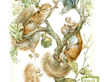 Acorn Brandy (print) - squirrel, happy hour, bar decor, party animals, illustration, artwork