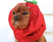 Strawberry Dog Snood - Stay-Put 3 Rows Elastic Thread - Specialty Dog snood - Cavalier or Cocker long ear covering