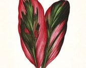 Vintage Botanical Tropical Leaf Series No. 3 - Giclee Art Print - Nautical Art - Beach Decor - Coastal Decor - Canvas Art - Botanical Print