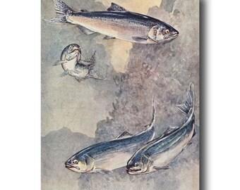 "Fly Fishing Gifts, 1930s Salmon Fish Art, Vintage Rustic Fishing Decor --- ""Chinook & Silver Salmon"" No. 284"