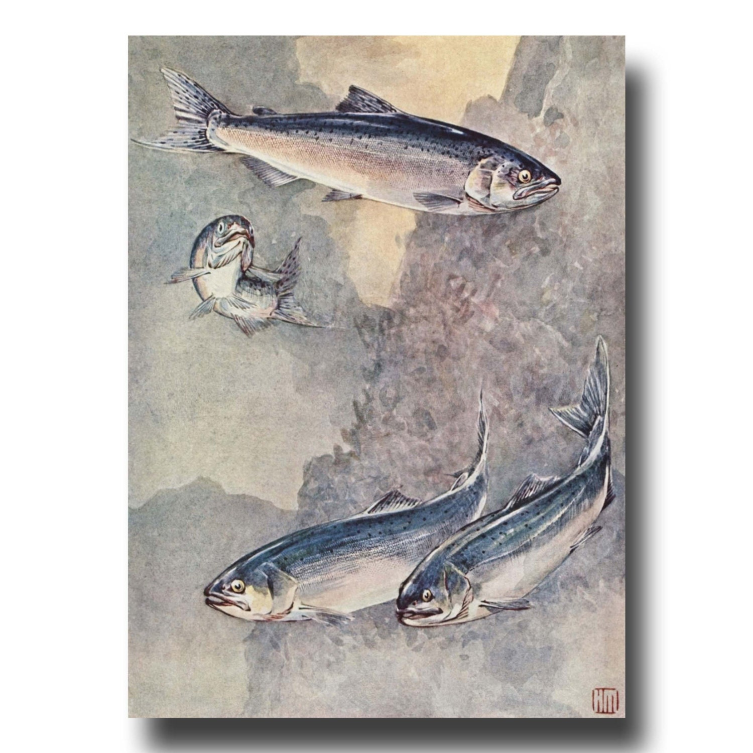Fly fishing gifts 1930s salmon fish art vintage rustic for Fly fishing gifts