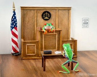 Lawyer Art, Lawyers in Court, Miniature Courtroom Scene with Live Frogs, Lawyer Gift