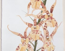 Orchids watercolor painting original. Floral paintings. Nature painting. Light ocher orchids painted by watercolors/ Small watercolors