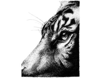Tiger Profile Fine Liner Drawing Print