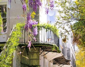 Charleston Art Window Purple Wisteria Fine Art Print Southern Decor