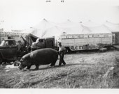Circus Hippo Vintage Snapshot Photo