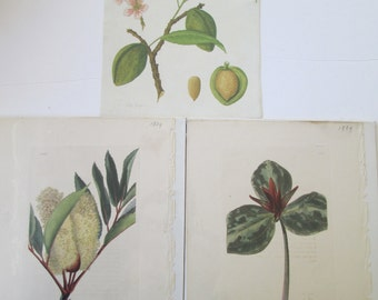 Antique Prints Botanical Foliage Lot of (3) Home Decor Art Wall Hanging Altered Art Scrapbooking