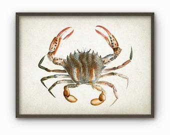 Crab Vintage Marine Wall Art Poster (AB15)