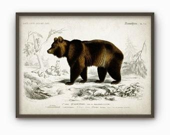 Brown Bear Vintage Illustration Wall Art Poster - Brown Bear Home Decor - Rustic Cabin Wall Art Print (B147)