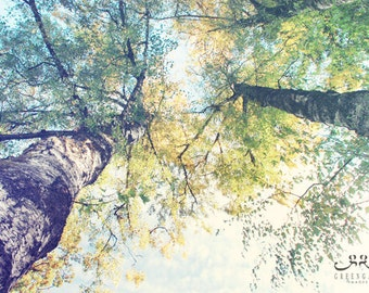 Trees photo print, wood grain, texture, outdoors, fall, autumn sky, perspective, leaves, art