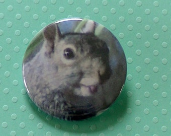 Squirrel Button Patch Silly Gray Squirrel Sticking His Tongue Out! Super Cute Squirrel- Pinback Button - Original Photo