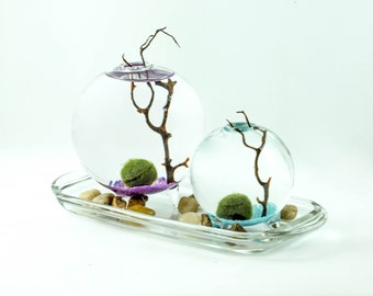 Marimo Moss Ball aqua terrarium on colored bed.