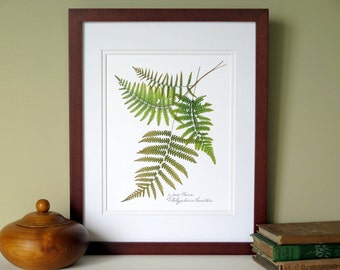 Pressed fern print, 11x14 double matted, Wood ferns, botanical ferns, wall decor no. 0010