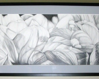 Graphite Drawing of Flower Petals