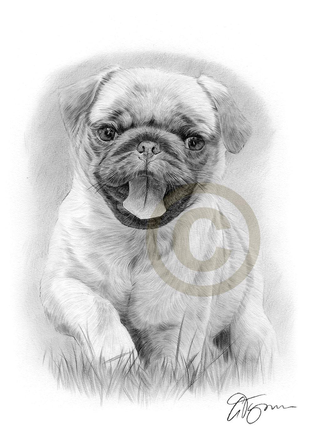 pug puppy running through grass pencil drawing print a4 size