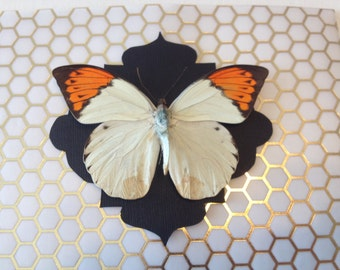 Butterfly Shadowbox - Gold Geo Series