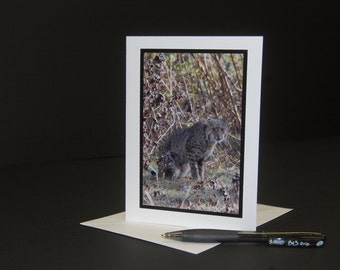 Bobcat Photo Note Card, Bobcat photograph, Camo Bobcat Card,