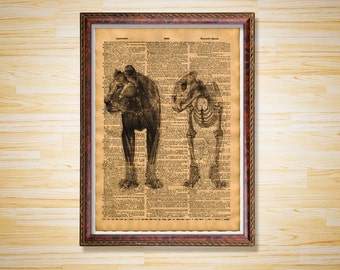 Lion Skeleton poster Medical dictionary page Anatomy print