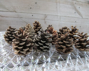 Holidays sale Great Lakes Pine Cones for Seasonal Crafting, Home Decorations, Holiday Crafts,