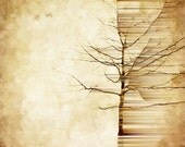"""Dynamic Geometric Tree Art Limited Edition Altered Photograph Matted Print """"Perpetual Astonishment"""" by Kat Sloma"""