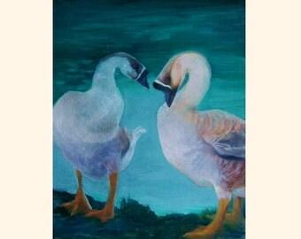 Preening Geese