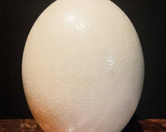 African Ostrich Egg X-Large