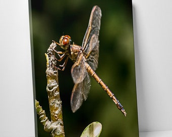 Dragonfly - Fine Art Canvas Gallery Wrap - Wall Hanging - Insects - Green and Brown