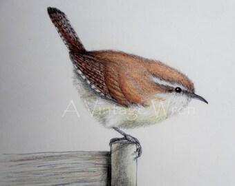 Wren art/ Fine art/ Original art/ Bird art/ Jenny wren