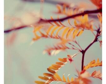 Nature Photography - Autumn Tree  - Fine Art Photograph - Autumn Art - Colored Leaves - Yellow - Blue Sky - Michigan - Fall - Autumn 3 - Art