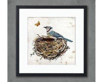 Blue Jay Bird in Nest Art Print