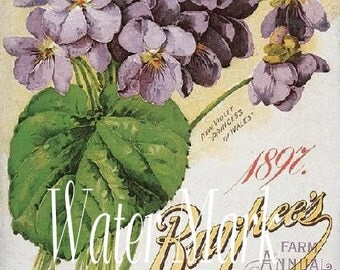 Digital scan*Flower seed*Burpee seed*  Gorgeous.Digital Download,cards, tags,postcards,sales tags,supplies,farm and home