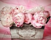pink peony photo, French peony, shabby cottage decor, pink flower photo, little girl decor, nursery decor, plantes fleurs