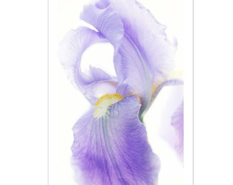 Purple Iris Card, Flower Photo Card , Floral Greeting Card, Blank Card, Mother's Day Card, Iris Photograph